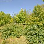 Foto Arboreto Giner de los Ríos 19