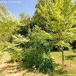 Foto Arboreto Giner de los Ríos 31