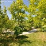 Foto Arboreto Giner de los Ríos 33