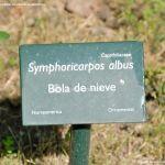 Foto Arboreto Giner de los Ríos 34