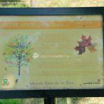 Foto Arboreto Giner de los Ríos 36