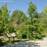 Foto Arboreto Giner de los Ríos 40