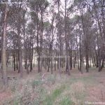 Foto Área Recreativa y Parque Forestal Dehesa de Santorcaz 3