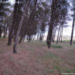 Foto Área Recreativa y Parque Forestal Dehesa de Santorcaz 6