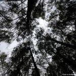 Foto Área Recreativa y Parque Forestal Dehesa de Santorcaz 7