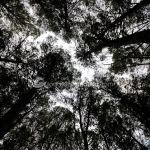 Foto Área Recreativa y Parque Forestal Dehesa de Santorcaz 11