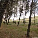 Foto Área Recreativa y Parque Forestal Dehesa de Santorcaz 12