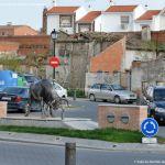 Foto Escultura El Toro 7
