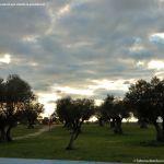 Foto Parque del Olivar 2