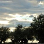 Foto Parque del Olivar 3