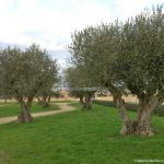 Foto Parque del Olivar 7