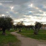 Foto Parque del Olivar 9