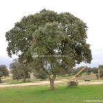 Foto Parque del Encinar 1