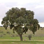 Foto Parque del Encinar 2