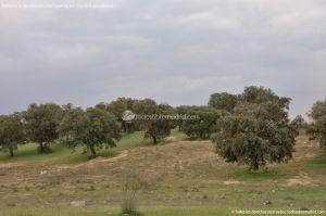 Foto Parque del Encinar 9