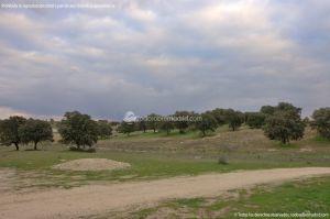 Foto Parque del Encinar 10