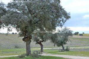 Foto Parque del Encinar 11