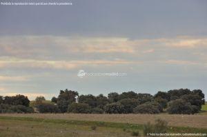 Foto Parque del Encinar 15