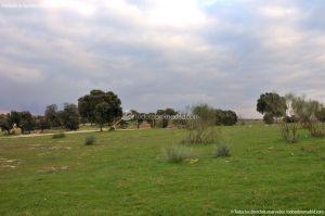 Foto Parque del Encinar 16