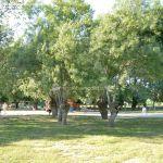 Foto Parque Municipal de Soto del Real 5