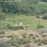 Foto Caballos en Bustarviejo 1