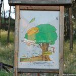 Foto Parque Forestal La Pililla 3