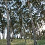 Foto Parque Forestal La Pililla 7