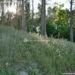 Foto Parque Forestal La Pililla 8