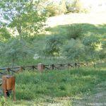 Foto Parque Forestal La Pililla 10