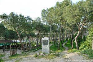 Foto Parque Forestal en Villanueva de Perales 3