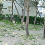 Foto Parque Forestal en Villanueva de Perales 13