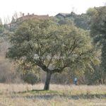 Foto Encinas en Villanueva del Pardillo 7