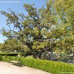 Foto Jardín del Parterre 7