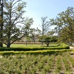 Foto Jardín del Parterre 10