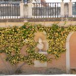 Foto Jardín del Parterre 50