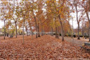 Foto Jardín de la Isla 45
