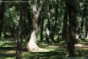 Foto Área Recreativa Nuestra Señora La Virgen de Gracia 6