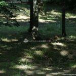 Foto Ardillas en el Parque del Príncipe 5