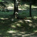 Foto Ardillas en el Parque del Príncipe 7