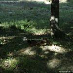 Foto Ardillas en el Parque del Príncipe 8