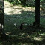 Foto Ardillas en el Parque del Príncipe 10