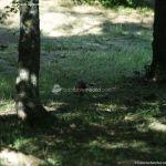 Foto Ardillas en el Parque del Príncipe 12
