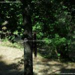 Foto Ardillas en el Parque del Príncipe 15