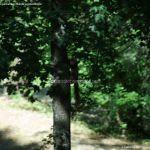 Foto Ardillas en el Parque del Príncipe 18