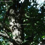 Foto Ardillas en el Parque del Príncipe 20
