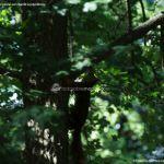 Foto Ardillas en el Parque del Príncipe 22