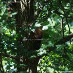 Foto Ardillas en el Parque del Príncipe 23