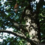 Foto Ardillas en el Parque del Príncipe 24