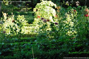 Foto Real Jardín Botánico 15