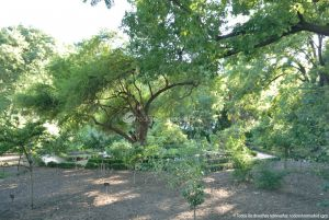 Foto Real Jardín Botánico 50
